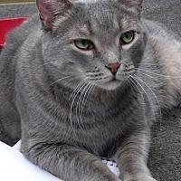 Adopt A Pet :: Picasso - Courtesy Listing - Evanston, IL