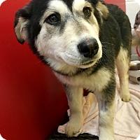 Adopt A Pet :: Davina - Las Vegas, NV