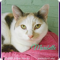 Adopt A Pet :: Maribelle - Gonic, NH