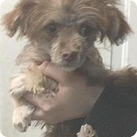 Adopt A Pet :: Ellie (adopted( - Redding, CA