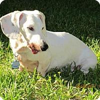 Adopt A Pet :: Casper - Pearland, TX