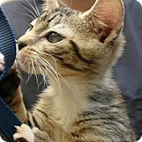 Adopt A Pet :: Ethel - Secaucus, NJ