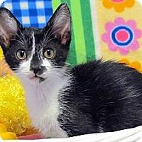 Adopt A Pet :: Foxi Moxi - Orlando, FL