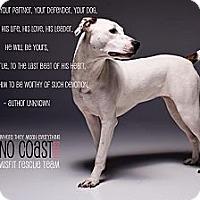 Adopt A Pet :: Bindi - Louisville, KY