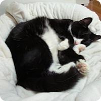 Adopt A Pet :: Bandit - Alexandria, VA