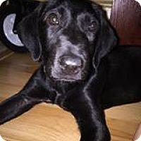 Adopt A Pet :: Chaya - Marlton, NJ