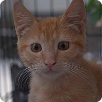 Adopt A Pet :: Sherbet - Brooklyn, NY