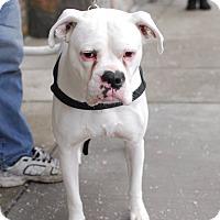 Adopt A Pet :: Casper-Adopted! - Detroit, MI