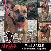 Adopt A Pet :: Sable - Spring City, PA