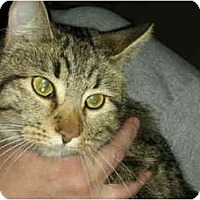 Adopt A Pet :: Tigerlilly - Washington Terrace, UT