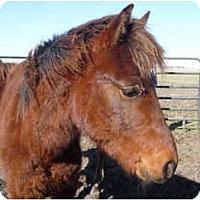 Adopt A Pet :: Peso - Dewey, IL