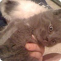 Adopt A Pet :: *Blue - Winder, GA