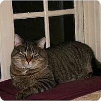 Adopt A Pet :: Charlie - Jenkintown, PA