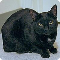 Adopt A Pet :: Bella - Victor, NY
