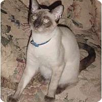 Adopt A Pet :: Rusty - Franklin, NC