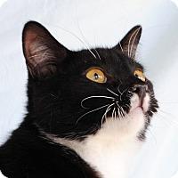 Adopt A Pet :: Dewey - Palmdale, CA