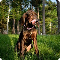 Adopt A Pet :: Buckwheat - Douglas, ON