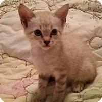 Adopt A Pet :: Gretel - Ocala, FL