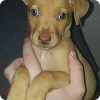 Adopt A Pet :: Rylie - Homestead, FL