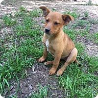 Adopt A Pet :: Paris - Spring, TX