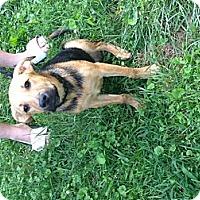 Adopt A Pet :: Apollo - Providence, RI