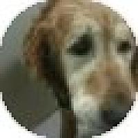Adopt A Pet :: Sir Edward - Denver, CO
