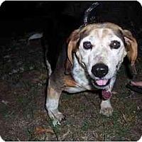 Adopt A Pet :: Elliott - Indianapolis, IN