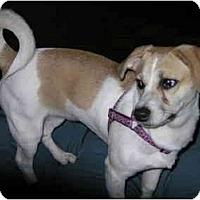 Adopt A Pet :: Lori in Houston - Houston, TX