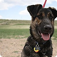 Adopt A Pet :: Denver - Broomfield, CO