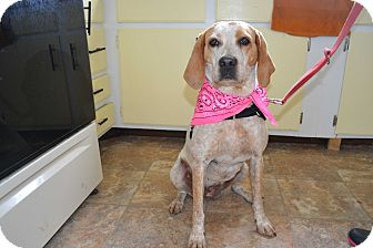 Coonhound Mix Dog for adoption in East Smithfield, Pennsylvania - Stacy (Sponsored)
