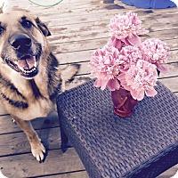Adopt A Pet :: Sunny - Fayette City, PA