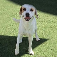 Adopt A Pet :: Jake - Irvine, CA
