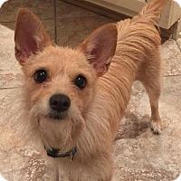 Adopt A Pet :: Shannon - Alpharetta, GA