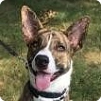 Adopt A Pet :: Tiger - LaGrange, KY
