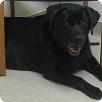 Adopt A Pet :: Molly - Gary, IN