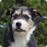Adopt A Pet :: GOOFY - Ile-Perrot, QC