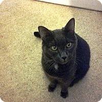 Adopt A Pet :: Calvin - Putnam, CT