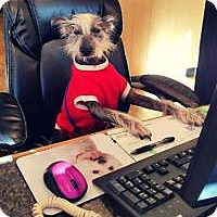 Adopt A Pet :: Jack - Irmo, SC