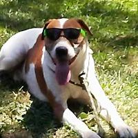 Foxhound Mix Dog for adoption in Charlotte, North Carolina - Bandit
