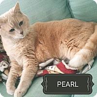 Adopt A Pet :: Pearl - Radford, VA