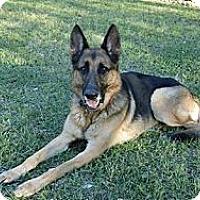 Adopt A Pet :: Rambo - Green Cove Springs, FL