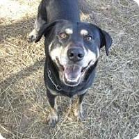 Adopt A Pet :: Benny - Bergheim, TX
