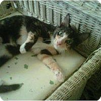 Adopt A Pet :: Kali - Los Angeles, CA