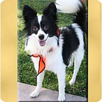 Adopt A Pet :: Quinn - Scottsdale, AZ