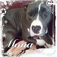 Adopt A Pet :: Mona - Sacramento, CA