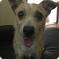 Adopt A Pet :: Elli - San Francisco, CA