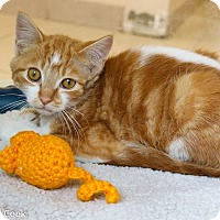 Adopt A Pet :: K.P. - Ann Arbor, MI