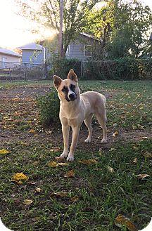 German Shepherd Dog Mix Dog for adoption in Manhattan, Kansas - Bella