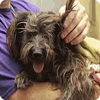 Adopt A Pet :: Frances - HW+ - Aurora, CO