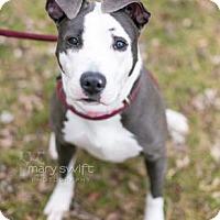 Adopt A Pet :: Rockette - Reisterstown, MD